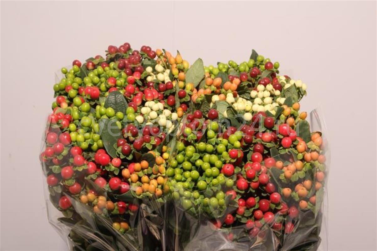 Купить сухоцветы оптом спб искусственные цветы в кирове купить