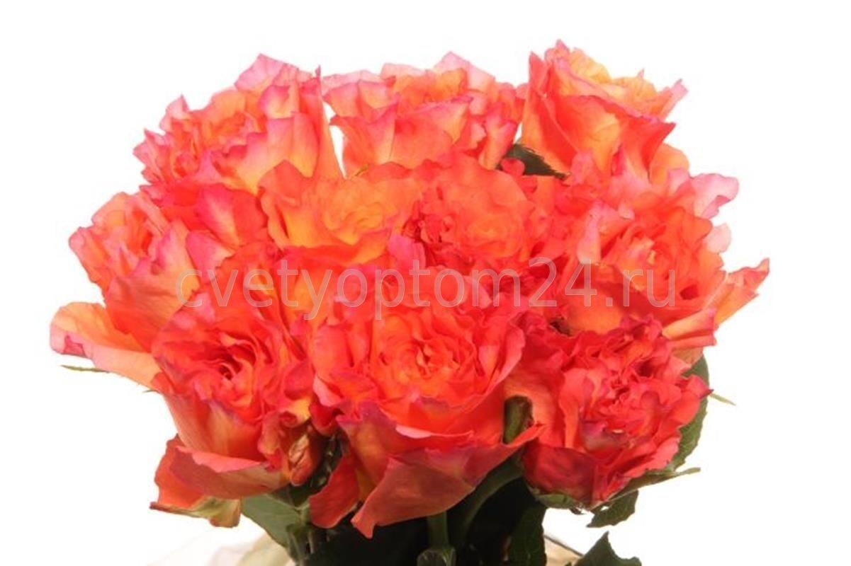 Цветы оптом в г спб с доставкой, букет на свадьбу от гостей из роз