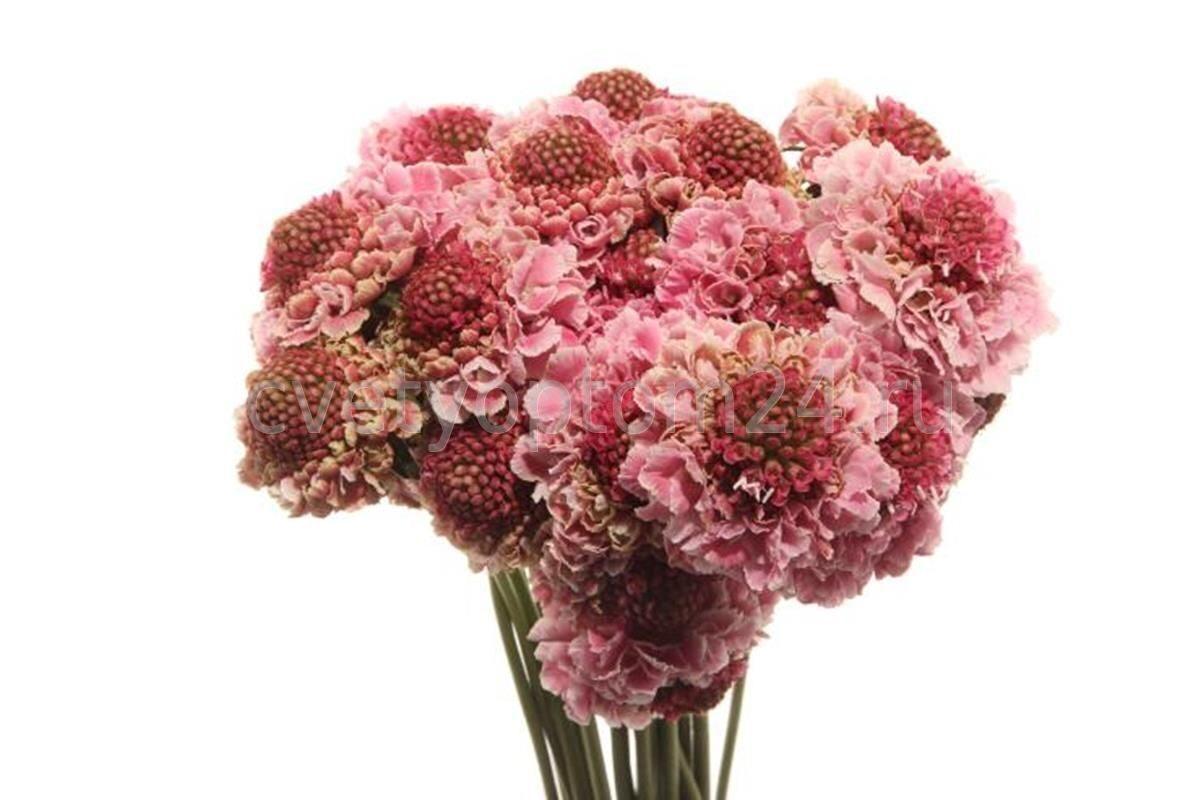 Цветы оптом в г спб с доставкой — 10
